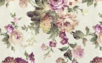 Arcadia Rose